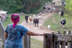 Рабочий день женщин в сельской местности