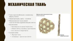 Мертвые клетки социального организма